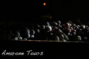 Amarone grapes.