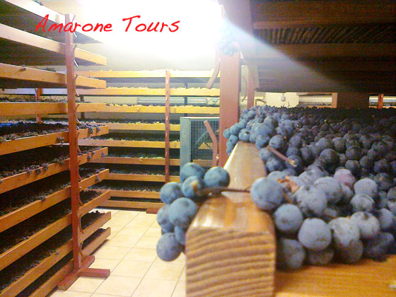 drying grapes for amarone