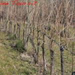 amarone-winter-vines-2