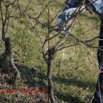 amarone-winter-vines-pruning-3