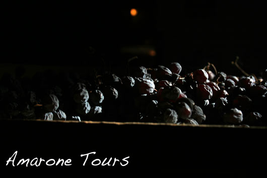 Valpolicella 2011 harvest – drying grapes