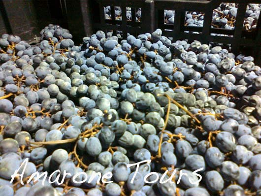 amarone dried grapes