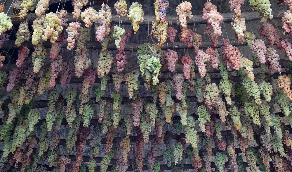 Grapes of Garganega varietal hanging from the gate of Soave Castle